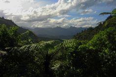 Near Whitianga, New Zealand