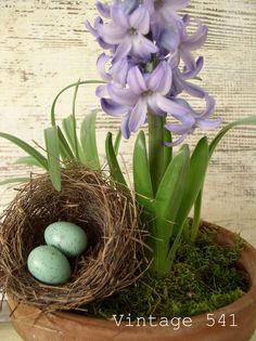 Vintage 541: Potted Hyacinth