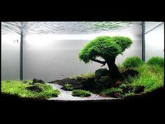 zen tree and scenic aquarium