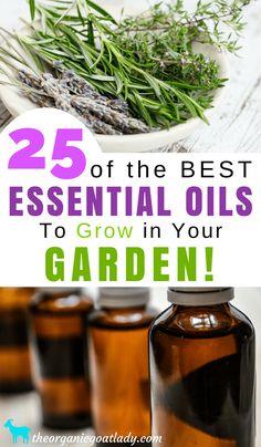 Gardening Tips, Herbs In The Garden, Essential Oils, Essential Oil Recipes, 25 of the Best Essential Oils To Grow In Your Garden!