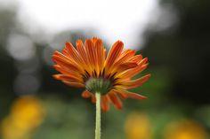 Howard Sooley photo; Five Veg Patch Favorites. Gardenista