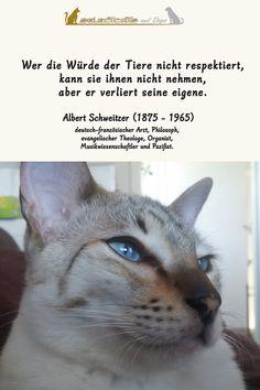 Die Würde der Tiere - treffendes Zitat von Albert Schweitzer #katze #tiere #sprüche #tierwürde Dog Cat, Cats, Animals, Respect Activities, Animal Welfare, Sunday, Inspiring Sayings, Gatos, Animales