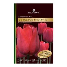Tulipes Triomphe 'rouge' : calibre 14+, le sachet de 20 bubles