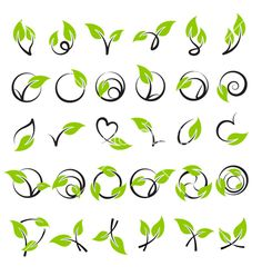 Leaves design elements vector by ussr on VectorStock®