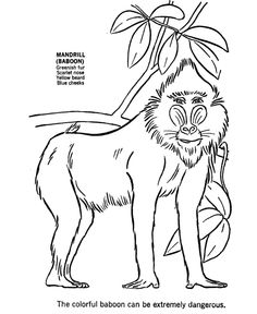 wild animal coloring pages baboon coloring page and kids