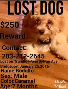 2/3/16 LOST!!! Connecticut courtesy post** Please share