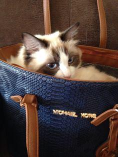 Noor love bags from michael kors...