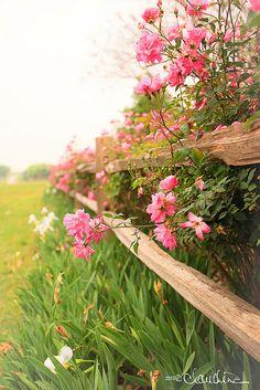 Taken at my favorite nursery/garden centers - The Antique Rose Emporium.
