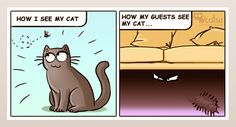 About different points of view   Catsu The Cat