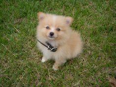 cute pets photo: cute and innocent KYRO006.jpg