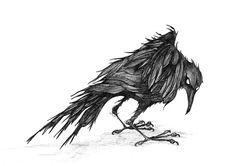 pics of crowa | passing crow caught by the nib