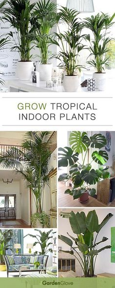 Grow Tropical Indoor Plants • Helpful Tips Ideas! REAL Green Plants = WOW....!!!! Give it a TRY....!!!!!