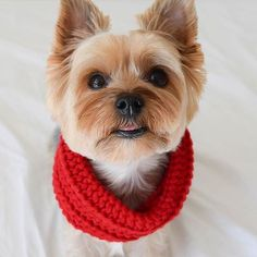 Peep how dapper our fabdog® of the Month @louis.yorkie is in his new fabdog® Red Infinity Scarf!  Want to enter to be our fabdog® of the Month for November & win over $350 worth of fabdog apparel, accessories, & toys? Tag @fabdoginc in a pic of your dog w/ their fabdog® product & use #fabdogofthemonth in the caption between now & 10/31!  Photos will be selected for repost throughout the contest period • Factors for selection include originality, fabulosity, and overall *aww* factor • The ...