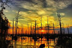 Sunset in the swamps of Louisiana.