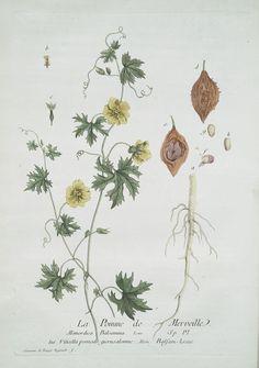La Pomme de Merveille. From New York Public Library Digital Collections.