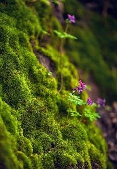 Moss in the forest.
