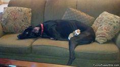 Little_Puppy_Sleeping