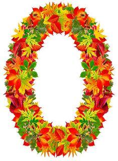 C, autumn alphabet isolated on white Alphabet Pictures, Preschool Art, Lettering Design, Autumn Leaves, Pop Art, Flowers, Projects, Letter Designs, Music Files