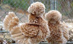 animals, bad hair