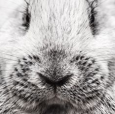 Da jeg var 14 fikk faren min en fiks idé om at vi burde ha noen kaniner på gården. Vi dro til et sted som heter Foldvik og kjøpte et par som fikk navnene Babar og Ghandu. Så snekret vil en stor inngjerding ved elven. Lite visste vi at kaniner elsker å grave. Det var mye jobb å tette alle hullene så de ikke spiste opp krydderhagen som lå ved siden av. Lykken var stor og etterhvert fikk de barn. Babar fortsatte å rømme så vi ga opp å putte ham tilbake. På gården var det også en katt som het… Instagram