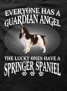 Springers are angels! :) ////////3fecb89edad7acfc82ed35ad3cb62420.jpg 507×686 pixels