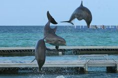Photos of Dolphin Island, Punta Cana -swim with dolphins and other sea creatures!