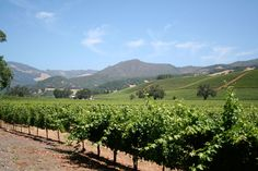 St. Francis Winery - Best Wineries in Santa Rosa - Something About Sonoma