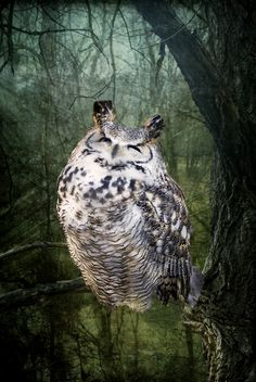 Great horned owl WOW! What a gorgeous pic of such a gorg owl!!! ❤❤❤