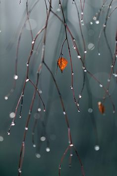 0ce4n-g0d:  Big cyan world, small orange leaf vertical by Gordana AM on Flickr.