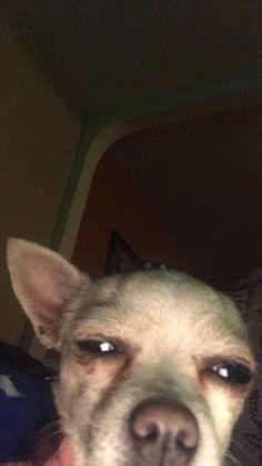 """Me: My stomach hurt Mom: cuz u be on that damn phone"" Funny Animal Jokes, Funny Dog Memes, Stupid Memes, Cute Funny Animals, Funny Relatable Memes, Cute Baby Animals, Funny Cute, Funny Dogs, Cute Dogs"