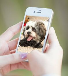 The Social Pet System by PetSafe lets you watch your pets from your computer or mobile device, allow your friends on Facebook to take photos, and manage who can give your pets TREATS!