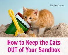 How to Keep the Cats Out of Your Sandbox...  A natural method for keeping the neighborhood cats out of your sandbox, your garden and your porch. We've been doing this for nearly 3 years - it really works!