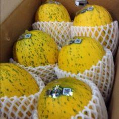 マーブルメロン 熊本県  Marble Melon Kumamoto