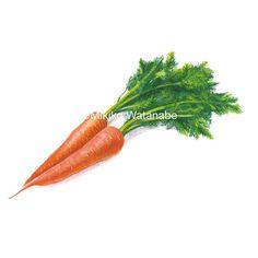 にんじんスープのパッケージイラスト | 熊本のイラストレーター わたなべみきこ Kumamoto, Carrots, Vegetables, Illustration, Carrot, Vegetable Recipes, Illustrations, Veggies
