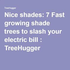 Nice shades: 7 Fast growing shade trees to slash your electric bill : TreeHugger
