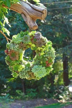 How to make a spring succulent wreath