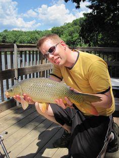 Nice common carp caught on the Occoquan reservoir in Va. using deer corn as bait.