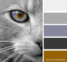 Color, home decoration