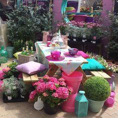 Wat een vrolijkheid gekleurde hortensia 39 s in mooi geglazuurde terracotta potten hortensia - Maak pool container ...