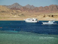 2 Jul 15 - M/Y Dreams - Northern #RedSea  #Wrecks - ONLY €599 per person! viLiveaboards Red Seais -