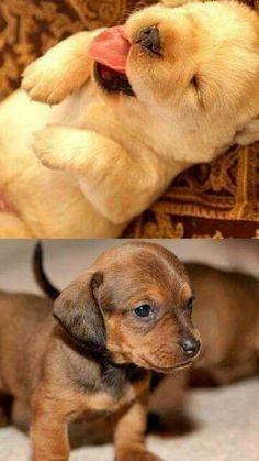 puppies♥