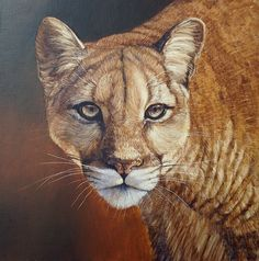 Tackle this incredible Mountain Lion in #oils by Ben Waddams now available on ArtTutor.