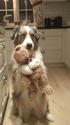 Dog hugging teddy. Not my image. Credit to