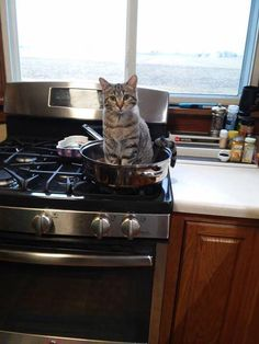 .Kitchen kitty
