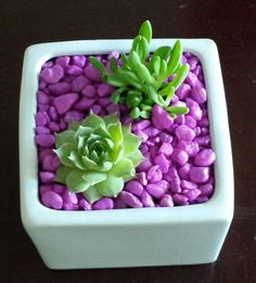 Small cheery succulent planting--white pot with pink stones. Would make cute party favors! Cacti And Succulents, Planting Succulents, Garden Plants, Indoor Plants, House Plants, Planting Flowers, Succulent Gifts, Succulent Terrarium, Succulent Arrangements