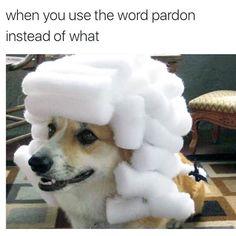 Advanced Language Time http://Words.OnlineClock.net #Doggo #FunnyAnimals #DogLovers #DogOwners #DogsLover #DogsOfInsta #DogsLover #PetSitter #DogsOnInstagram #Dogstagram #Animals #DogsAreBetterThanPeople #Pet #DogsOfInstagram #Pets #Dogs #DogsOfficialDog