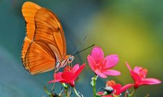 Orange Butterfly – Friday's Free Daily Jigsaw Puzzle