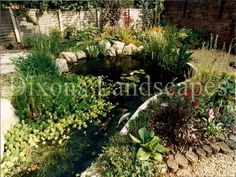 Garden Ponds Small or large, a water feature adds interest to any landscape