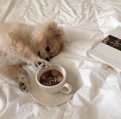 Bed Aesthetic, Cream Aesthetic, Brown Aesthetic, Simple Aesthetic, Pet Dogs, Dog Cat, Doggies, Baby Animals, Cute Animals