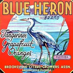 Vintage Original BLUE HERON CITRUS Crate Box Label Tangerines, Grapefruit and Oranges. Measures in inches 9 x Brooksville Citrus Growers Assn. This is new old stock never used or circulated in excellent condition. Florida Blue, Florida Oranges, Vintage Florida, Old Florida, Florida Girl, Florida Living, Brooksville Florida, Orange Crate Labels, Label Art